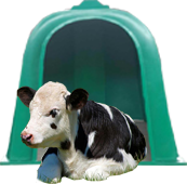 Кабинки за новородени телета зелена